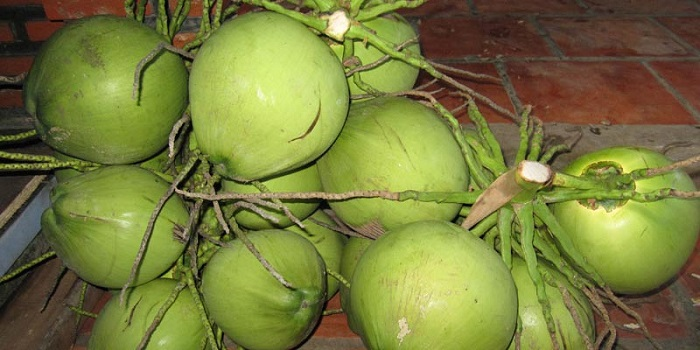 Cách lựa chọn dừa tươi ngon và cho nhiều nước