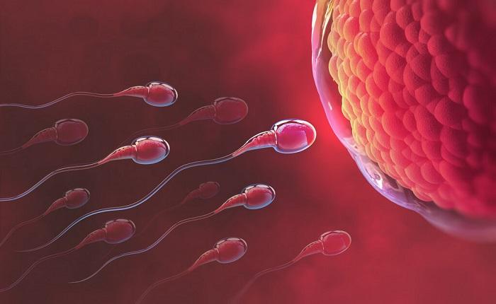 Thời kỳ rụng trứng là thời điểm dễ thụ thai nhất