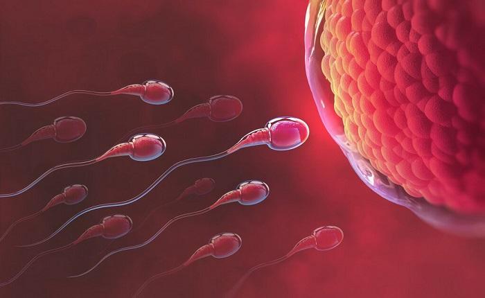 Quan hệ thường xuyên cũng là một cách để thụ thai bé gái dễ dàng